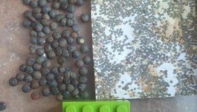 Photo 3 - les lentilles à coté des boules noires